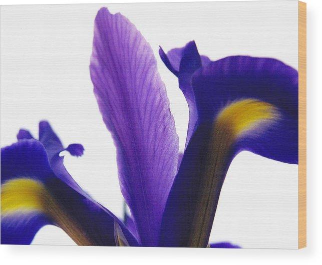 Iris Wood Print featuring the photograph Iris by Vah Pall