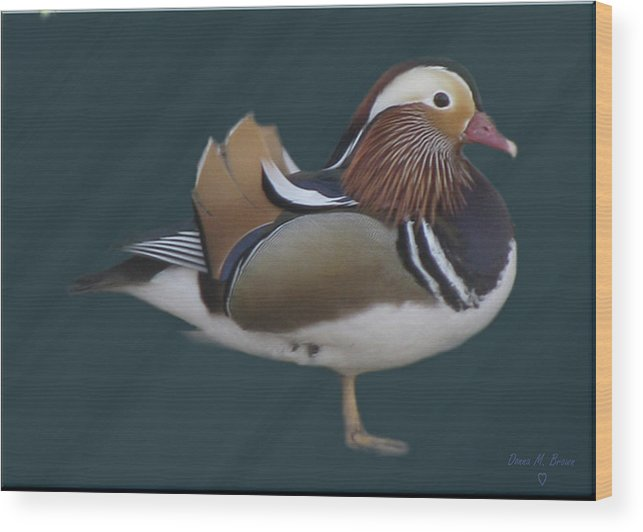 Duck Wood Print featuring the photograph Mandarin Duck II by Donna Brown