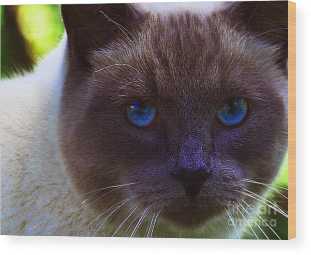 Blue Eyes Wood Print featuring the photograph Mr. Blue Eyes by Sharon Talson