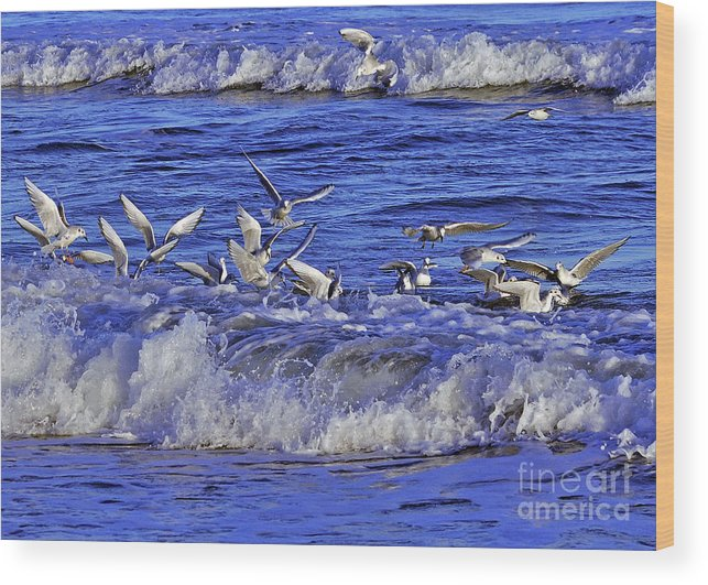 Birds Wood Print featuring the photograph Ocean Delight 2 by Lydia Holly