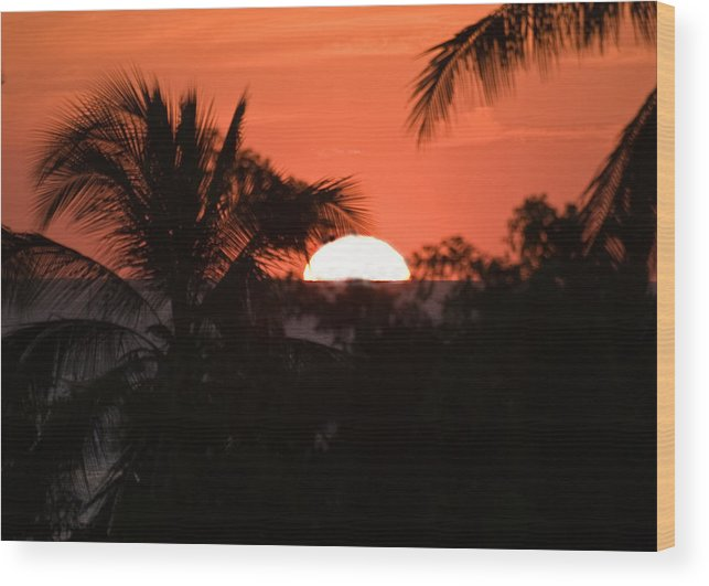 Sun Wood Print featuring the photograph Palm Sunset by Jim DeLillo