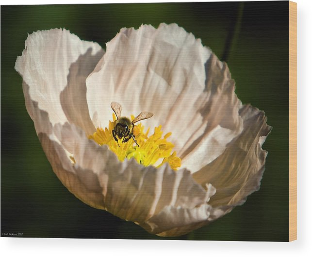 Flower Wood Print featuring the photograph Poppy Love by Carl Jackson