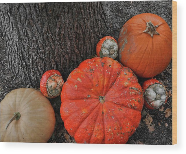 Pumpkin Wood Print featuring the photograph Red Orange by JAMART Photography