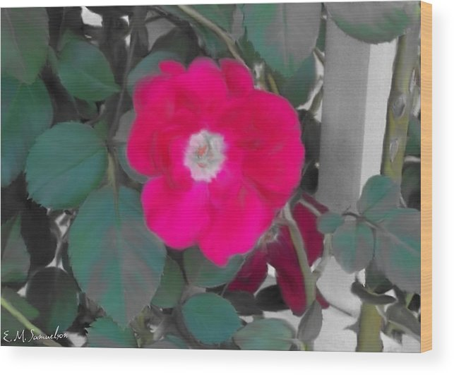 Nature Wood Print featuring the photograph Rose On A Trellis by Elise Samuelson
