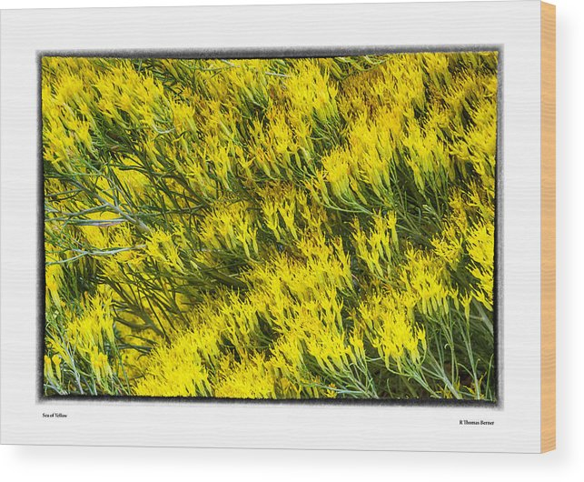 Wood Print featuring the photograph Sea Of Yellow by R Thomas Berner