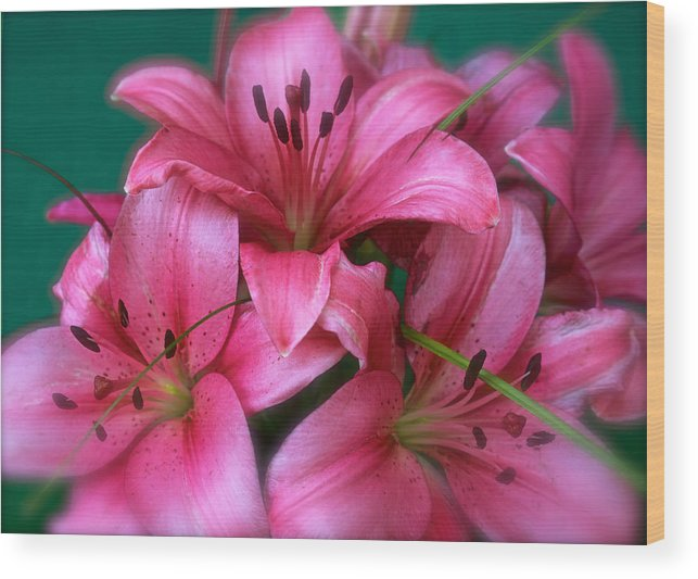 Flower Wood Print featuring the photograph Soooo Pretty by DUG Harpster