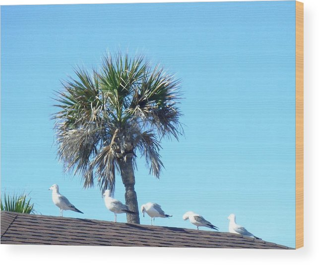 Sea Gulls Wood Print featuring the photograph Time To Rest by Francis Roberts ll