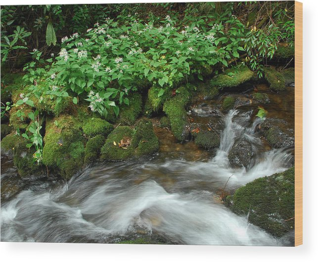 Wildflowers Wood Print featuring the photograph White Asters Along Palmer Branch by Alan Lenk