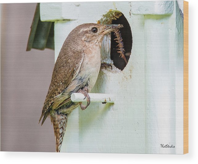 Baby Birds Wood Print featuring the photograph Wren Bringing Home The Bacon by Tim Kathka