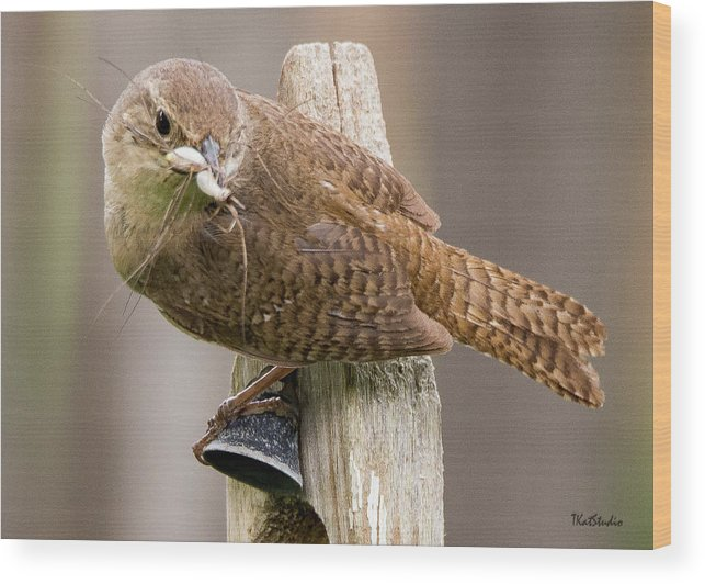 Baby Birds Wood Print featuring the photograph Wren Ringing The Dinner Bell by Tim Kathka