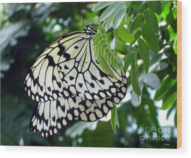 Butterfly Wood Print featuring the photograph Zebra In Disguise by Shelley Jones