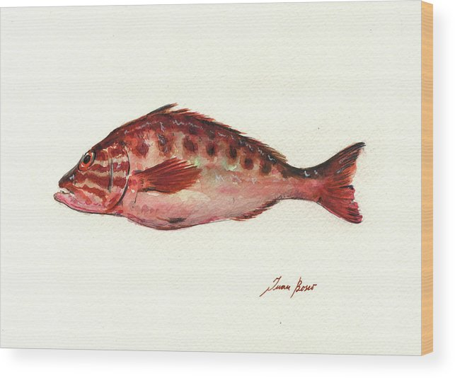 Fish Art Wood Print featuring the painting Comber Fish by Juan Bosco