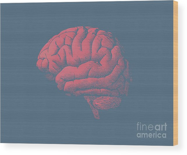 45 Wood Print featuring the digital art Engraving Brain Illustration With Tint by Jolygon