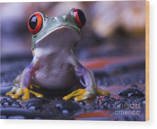 Big Wood Print featuring the photograph Frog by Sebastian Duda