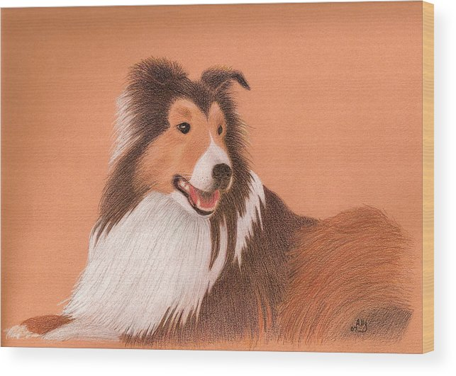 Sheltie Wood Print featuring the drawing Morgan by Ally Benbrook