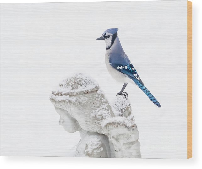 Blue Jay Wood Print featuring the photograph Blue Jay On An Angel by Warrena J Barnerd