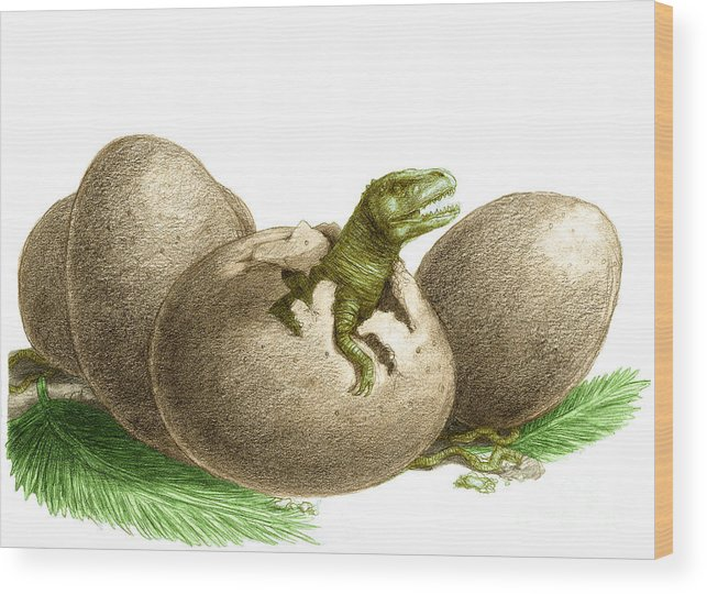 Dinosaur Egg Hatching Wood Print