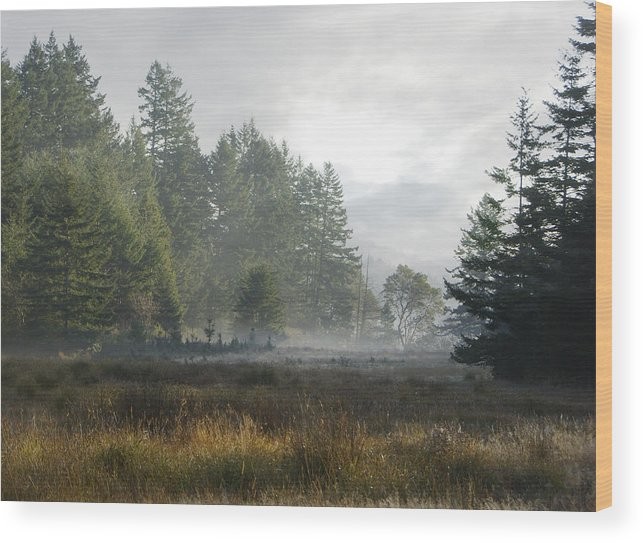 Misty Meadow Wood Print featuring the photograph Early Morning Mist by Marilyn Wilson