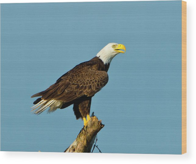 Adult Wood Print featuring the photograph North America, Usa, Florida, North Fort by Bernard Friel