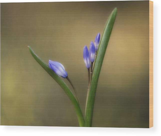 Flower Wood Print featuring the photograph One By One by Lotte Funch