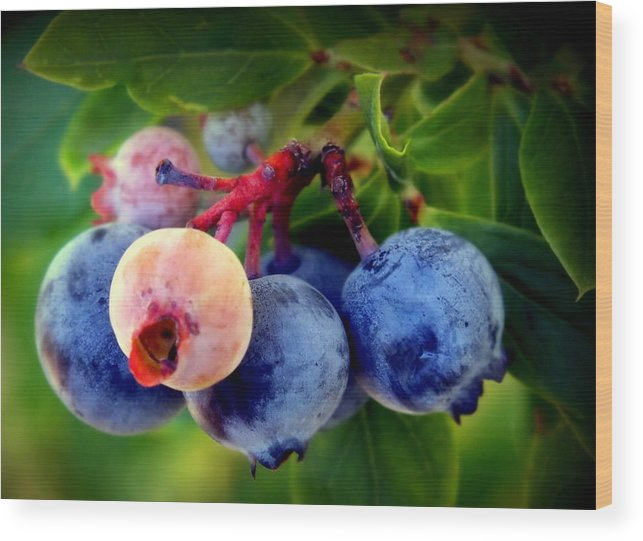 Blueberries Wood Print featuring the photograph Organic Blues by Karen Wiles