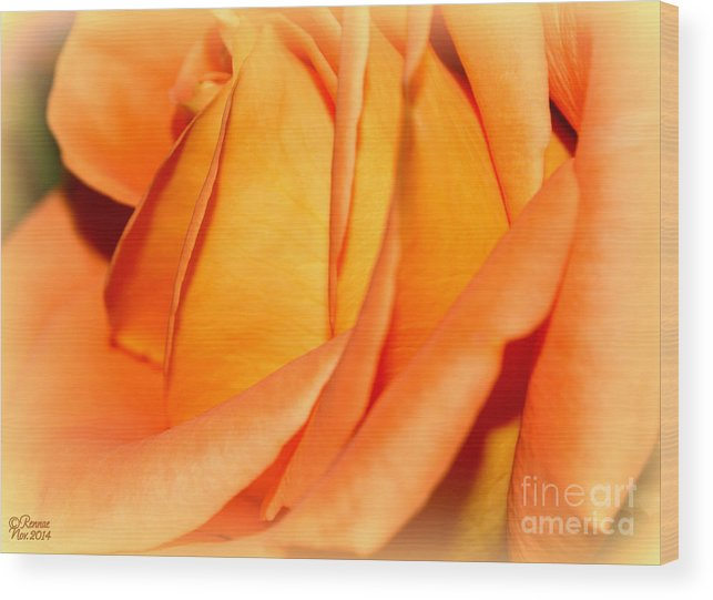 Flower Wood Print featuring the photograph Peach Rose by Rennae Christman