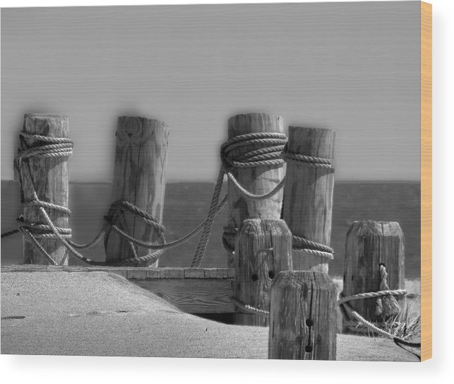 Dock Wood Print featuring the photograph Pilings Too by Paul Pecora