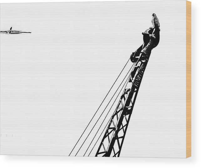 Hawk Wood Print featuring the photograph Stare Contest II by Steve Harrington