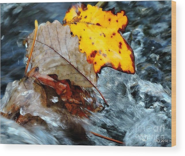 Photo Wood Print featuring the photograph Touching In Time by Tami Quigley