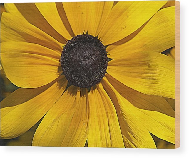 Yellow Flower Wood Print featuring the photograph Yellow Macro by Laurie Perry