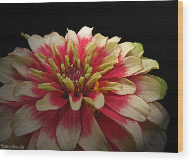 Nature Wood Print featuring the photograph Cherry Vanilla by Debbie Portwood