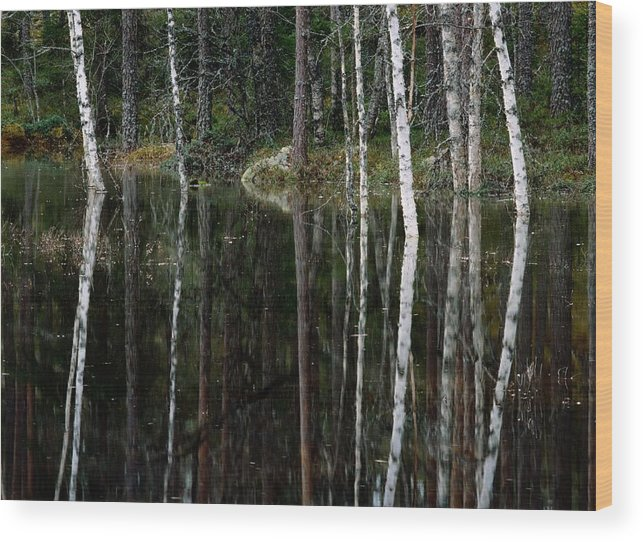 Scenic Views Wood Print featuring the photograph A Stream At High Water In A Woodland by Mattias Klum