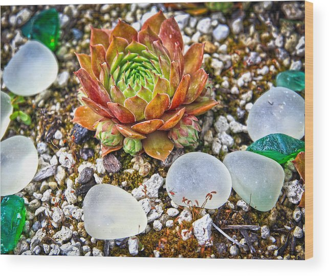 Agates Wood Print featuring the photograph Agates And Cactus by Steve McKinzie