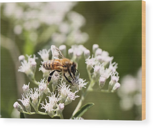 Bee Wood Print featuring the photograph Honey Bee by Katherine White