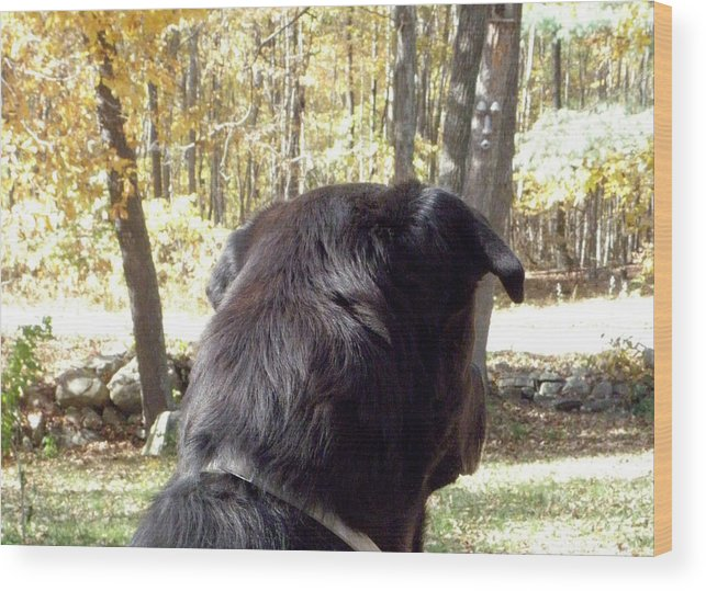 Dog Wood Print featuring the photograph I Hear Something by Kim Galluzzo Wozniak