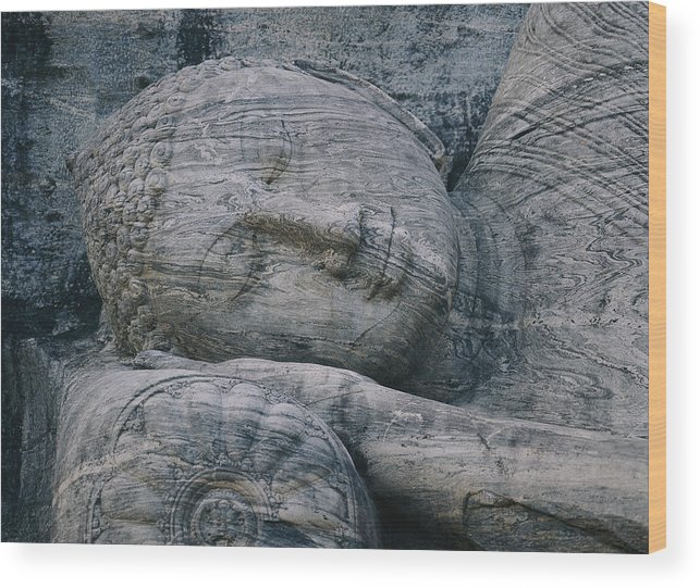 Asia Wood Print featuring the photograph The Head Of A Forty-four-foot-long by Mattias Klum