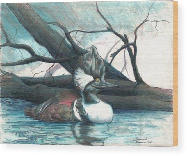 Duck Merganser Duck Pond Water Lake Birds Nature Wildlife Wood Print featuring the drawing Merganser Duck by Raymond Doward