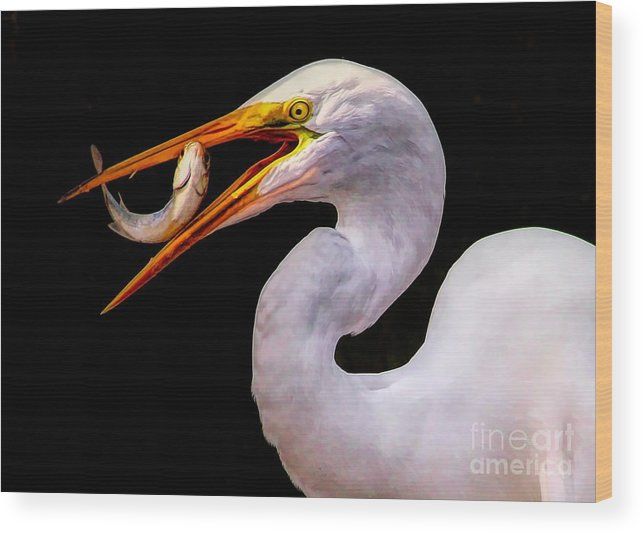 Great White Egret Wood Print featuring the photograph Huge Fish by Paulette Thomas