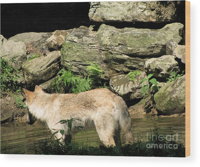 Water Park Wood Print featuring the photograph The Wild Wolve Group A by Debra   Vatalaro
