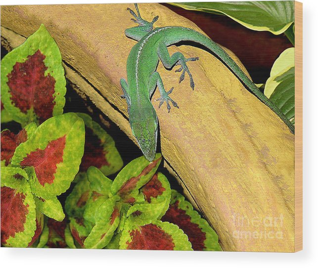Nature Wood Print featuring the photograph Anole Having A Drink by Lucyna A M Green