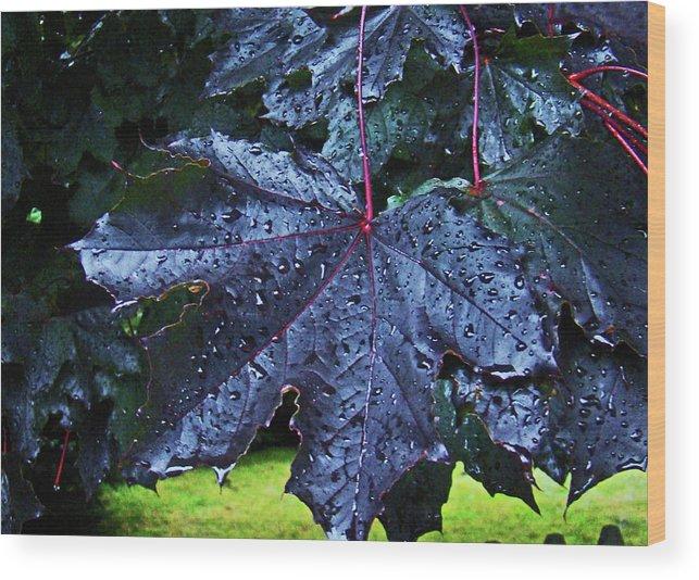 Al Bourassa Wood Print featuring the photograph Black Maple by Al Bourassa