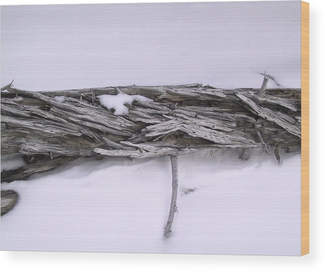 Tree Wood Print featuring the photograph Blue Banff-14 by Kevin Callahan
