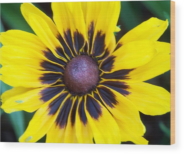Nature Wood Print featuring the photograph Bulls-eye by Sandy Collier