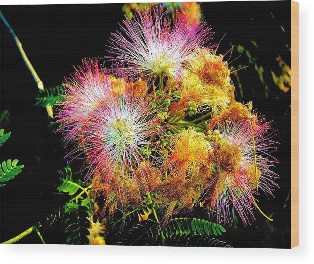 Nature Wood Print featuring the photograph Care For A Mimosa by Johann Todesengel