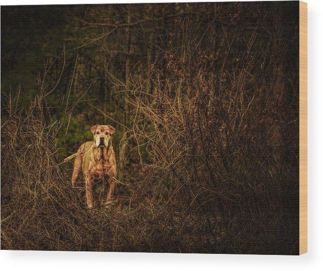 Animal Wood Print featuring the photograph Deep Mountain Sentinel by John Kimball
