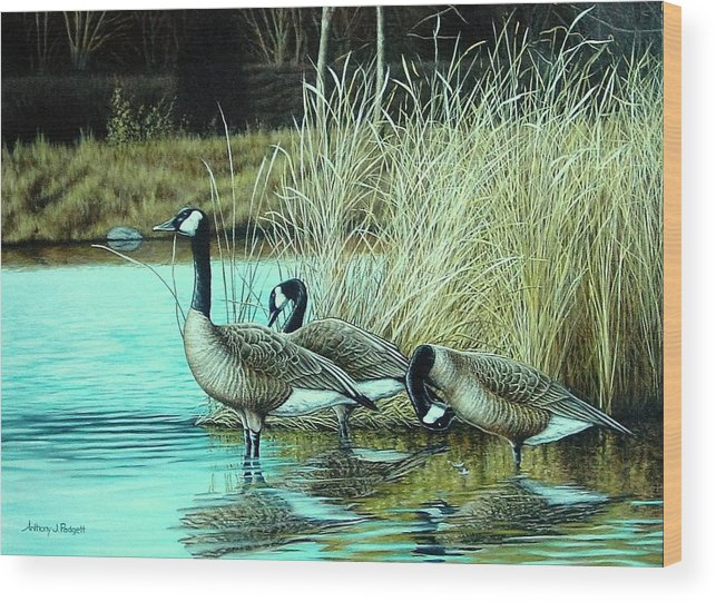 Geese Wood Print featuring the painting Geese On Watch by Anthony J Padgett