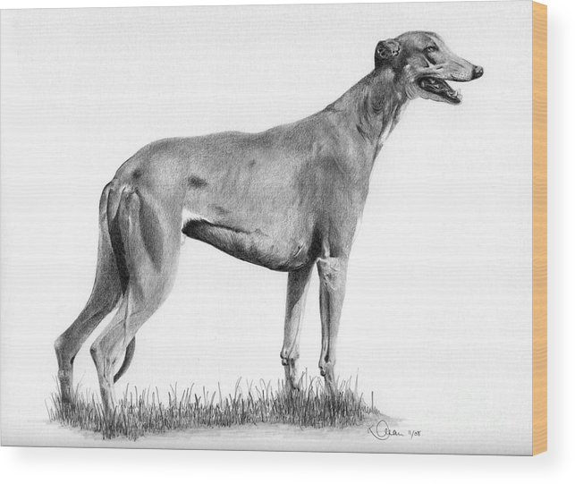 Dog Wood Print featuring the drawing Greyhound by Karen Townsend
