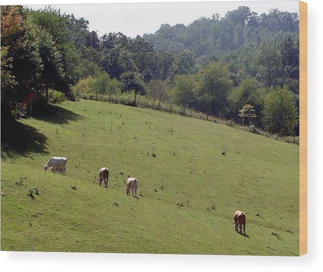 Nature Wood Print featuring the photograph Hillside Grazing by Cumberland Studios