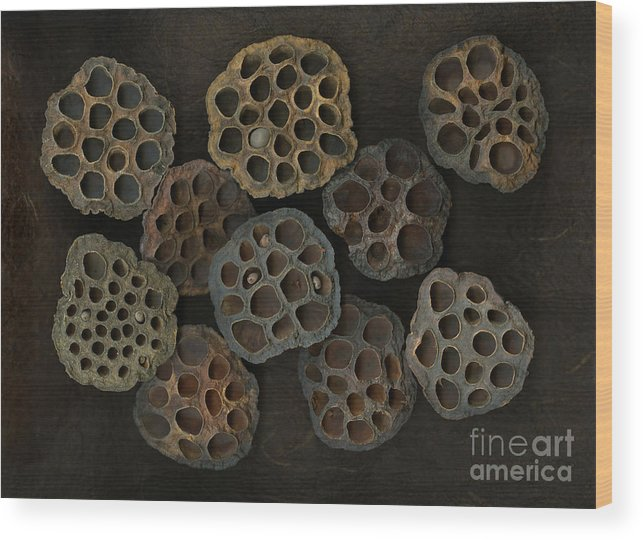 Lotus Wood Print featuring the photograph Lotus Pods by Christian Slanec