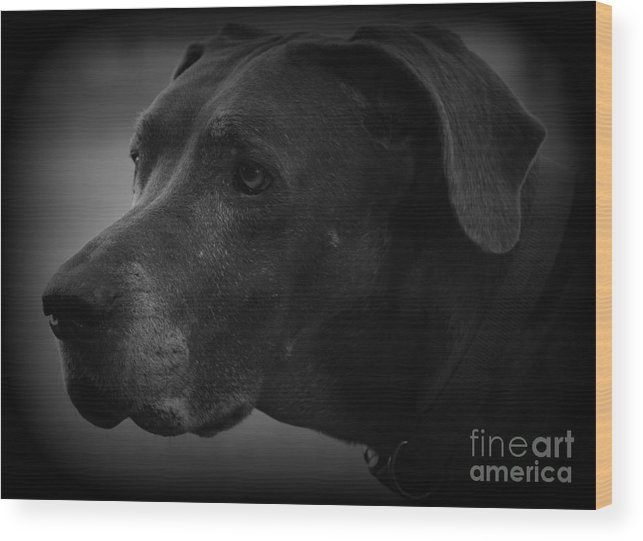 Great Dane Wood Print featuring the photograph Maggie by Davis FlowerPower